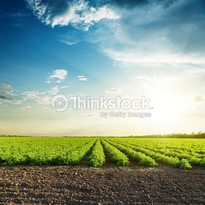 green agriculture fields and sunset in blue sky with clouds : Stock Photo