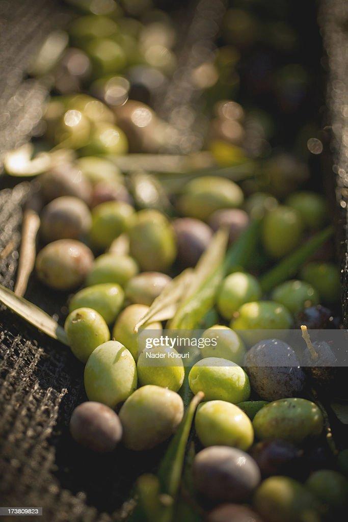 Green and black olives in basket