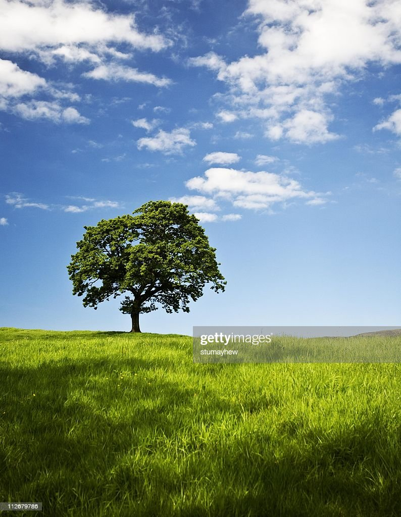 Green and pleasant land : Stock Photo