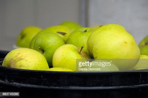Green apples in basket, Cowichan Valley, British Columbia, Canada