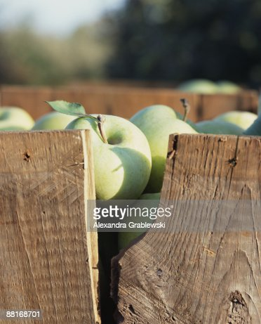 Green Apples in Crate : Stock Photo