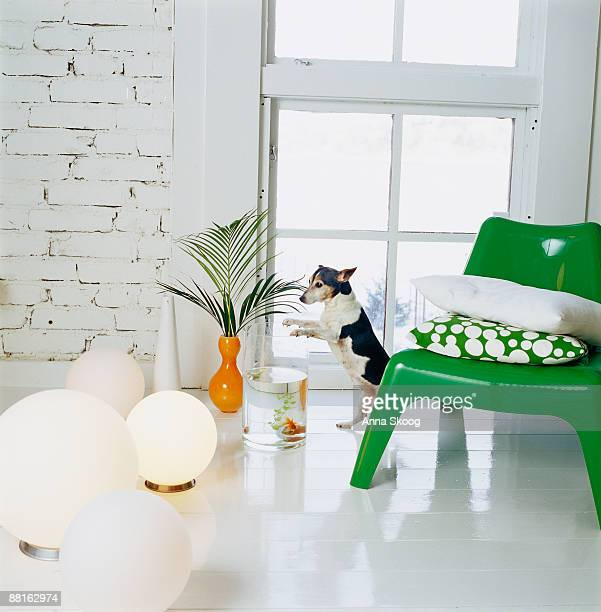 A green armchair in a white room Sweden.