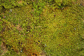 Greenery background of fresh forest moss