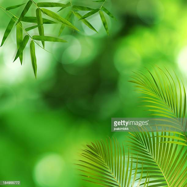 Green bamboo and palm leaf background