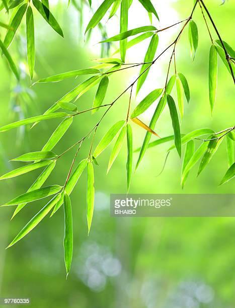 グリーン竹の葉
