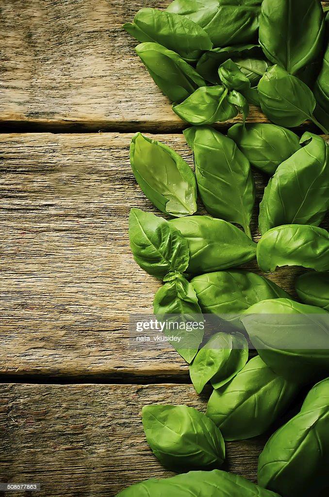 Grüne Basilikum : Stock-Foto