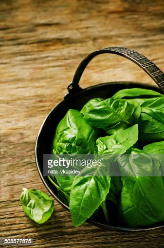 Basilic vert : Photo