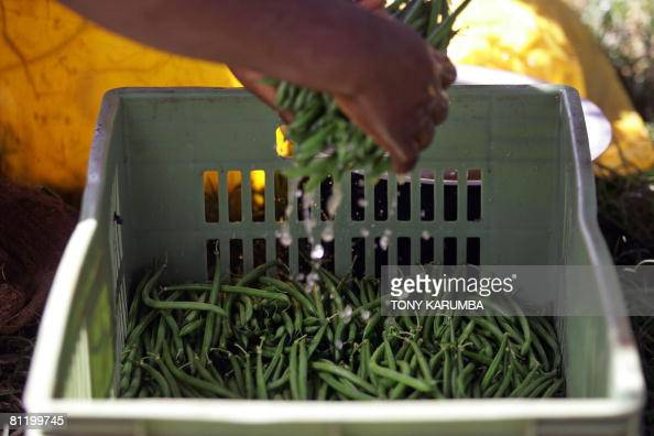 A green beans farmer packs on May 16 2008 his harvested crop in Kagio 90 kms northeast of Nairobi in Kenya's Central province district of Kirinyaga...