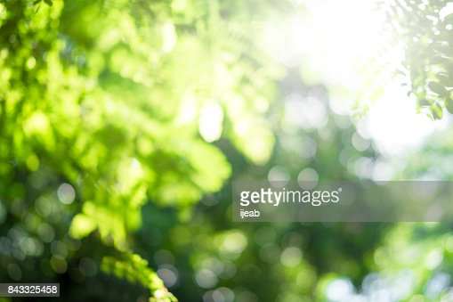 Green bokeh out of focus background from nature. : Stock Photo