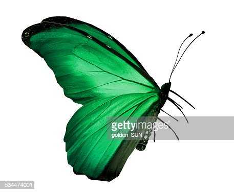 Green butterfly , isolated on white : Stock Photo