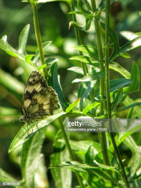 Green butterfly on plant