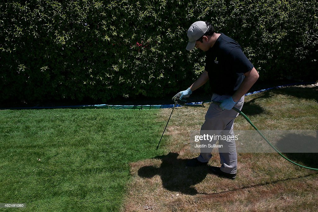 Green Canary worker Samuel Bucio sprays green water-based paint on a partially dead lawn at the Almaden Valley Athletic Club on July 21, 2014 in San Jose, California. As the severe California drought continues to worsen, home owners and businesses looking to conserve water are letting lawns die off and are having them painted to look green. The paint lasts up to 90 days on dormant lawns and will not wash off.