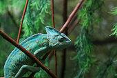 Green Chameleon Sitting on Plant Stalk