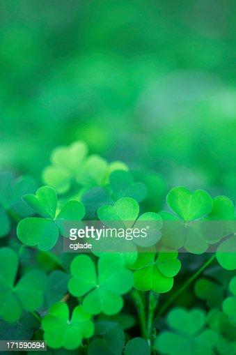Green Clover Background Vertical