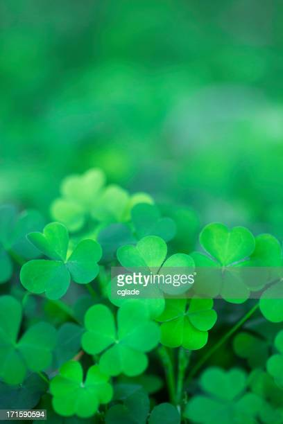 Green Clover Background Vertical