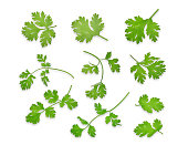 green coriandrum sativum leaves isolated on white background, flat lay, top view