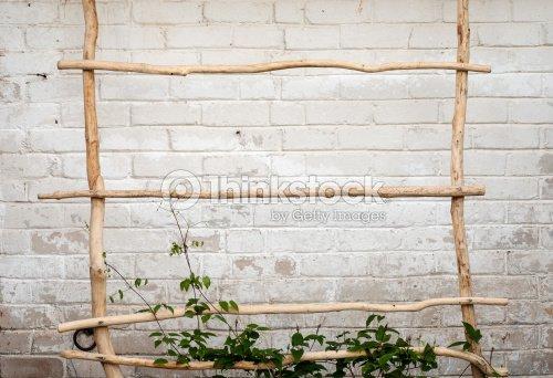 Green Creeper Plant Climbing A Ladder Stock Photo Thinkstock
