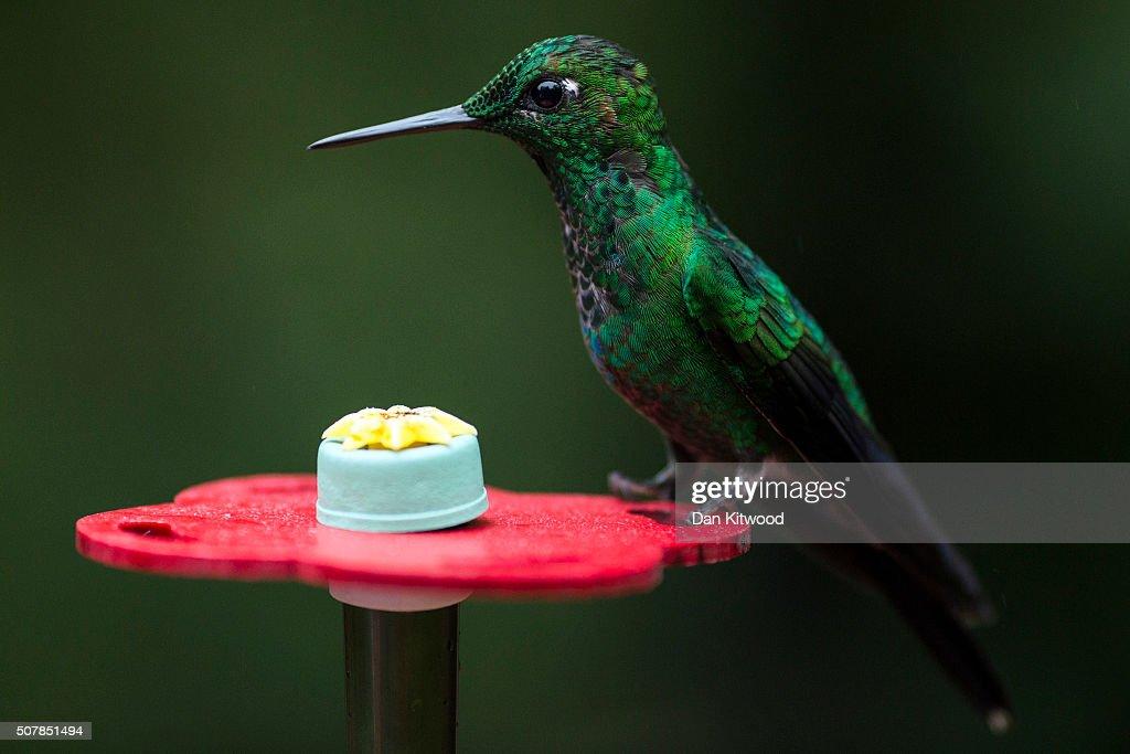 Tips for feeding hummingbirds in the winter | king5.com