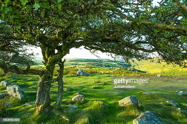 Green Dartmoor