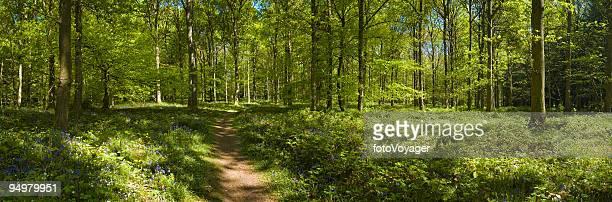 Caminho de Floresta verde enchanted