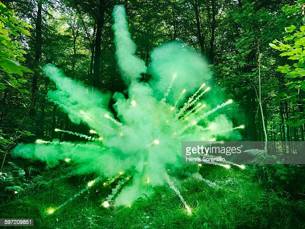 Green explosion in forest