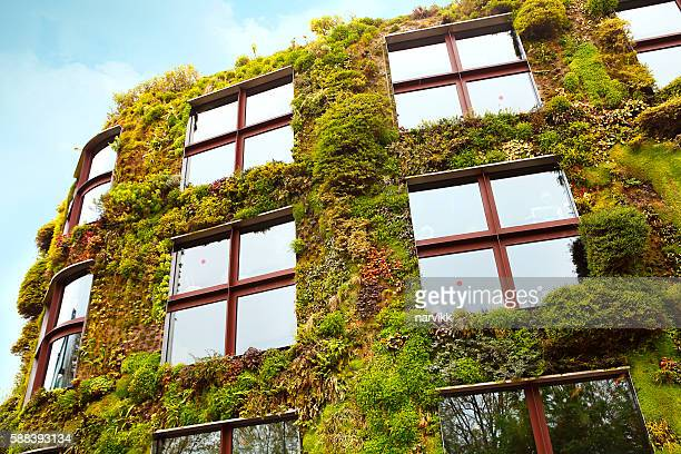 Green facade on the building