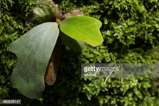 Green fern leaf : Stockfoto