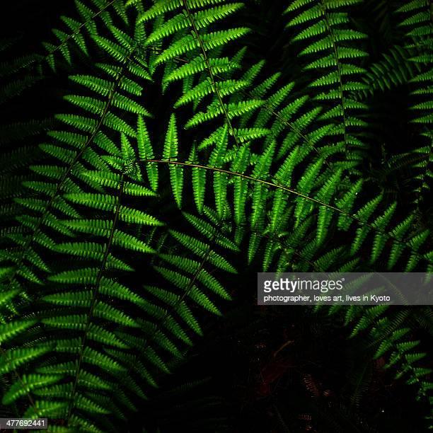 A green fern