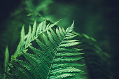 Close-up shot of fern leaves.