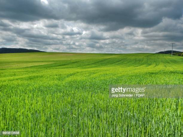 Green field against cloudy Sky