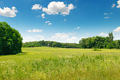 picturesque green field and blue sky