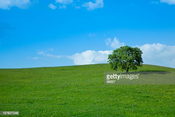 green field and lonely tree landscape