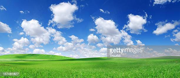 Green field and white clouds in the blue sky
