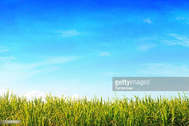 Green Field & Blue Sky