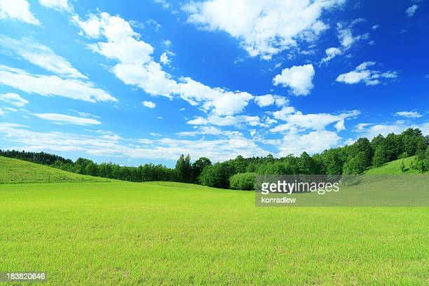 Green Field, Blue Sky  - Summer Landscape