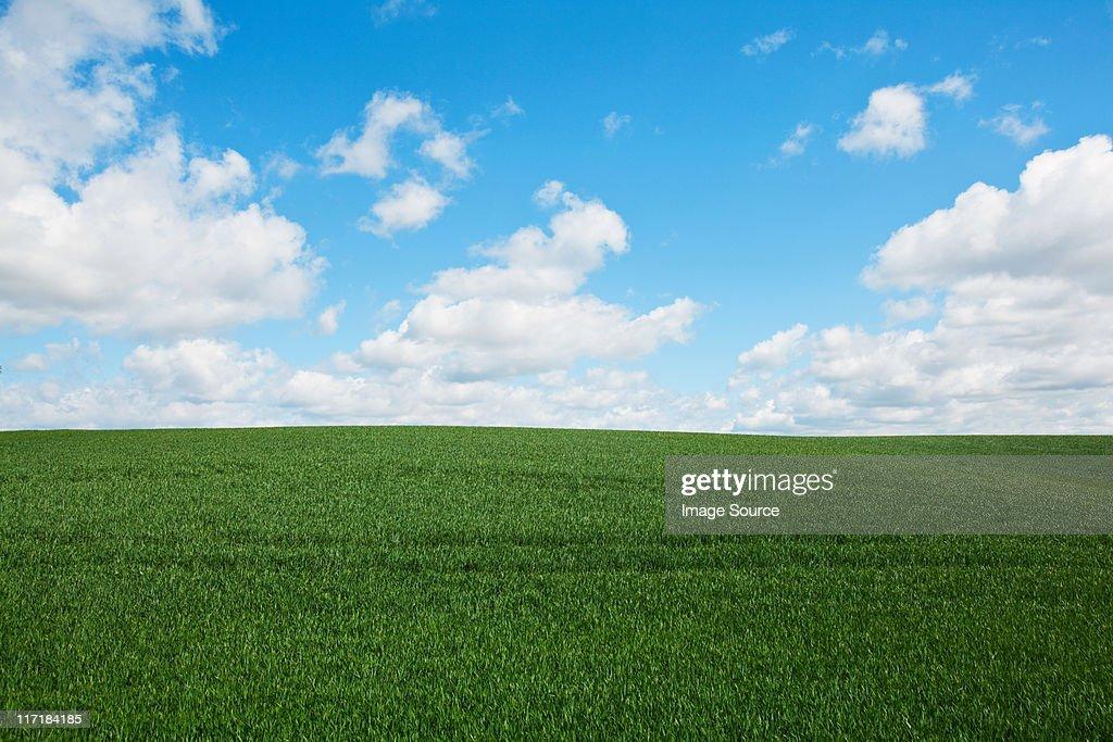 Green field, England, UK : Stock Photo
