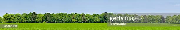 Grüne Feld Wald Hintergrund