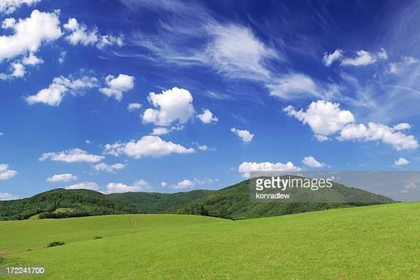 Green field Landscape