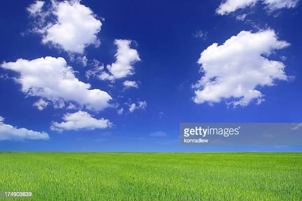 Grünen Feld-Landschaft