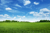 Field of green grass,trees and blue sky.