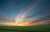 Green field of wheat at sunrise