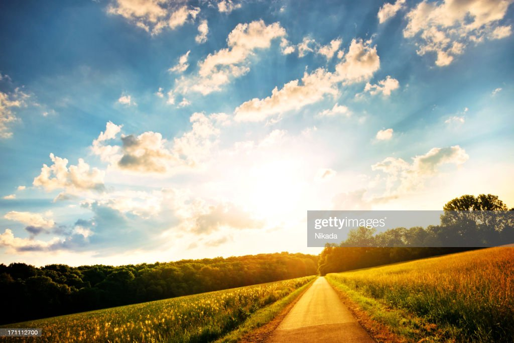 Green field on a sunny day : Stock Photo