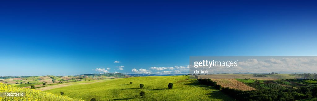 Green field over blue clear sky : Stock Photo