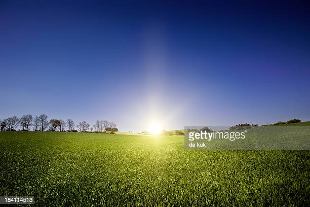 Green field over blue clear sky