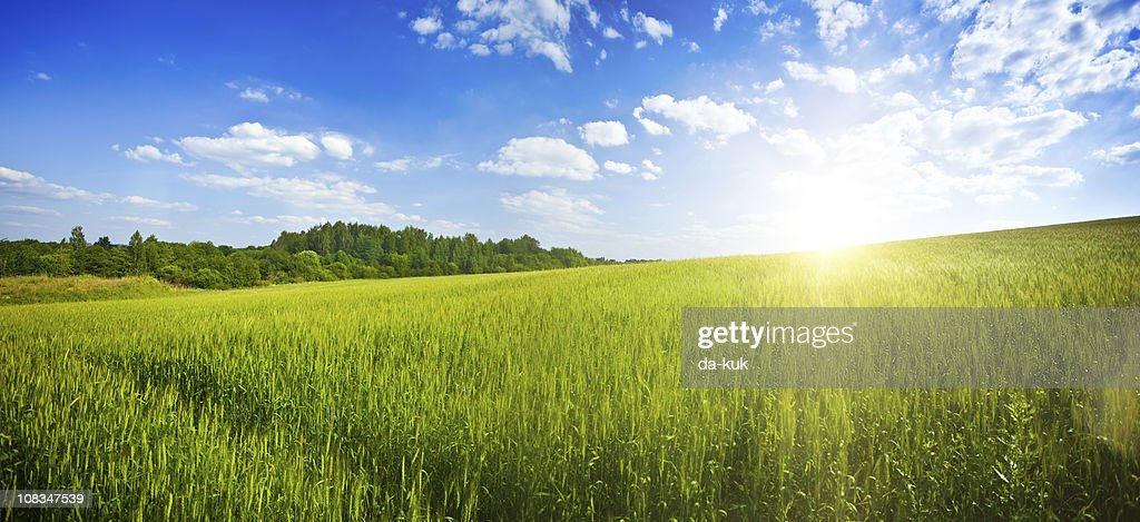 Green field over blue moody sky : Stock Photo
