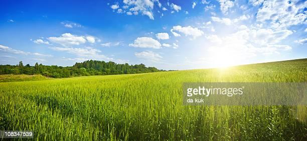 Green field over blue moody sky