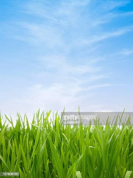 Vert field