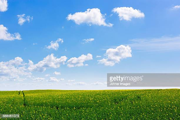Green field under blue sky