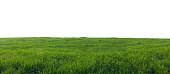 Panoramic view on green field isolated over white. Grass and meadow landscape