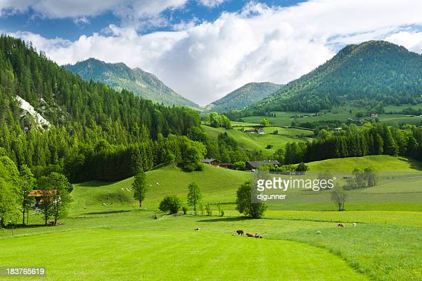 Grüne Felder und mounatins